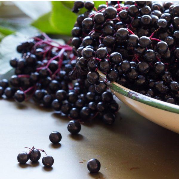 Elderberry Balsamic Vinegar by Coronado Taste of Oils